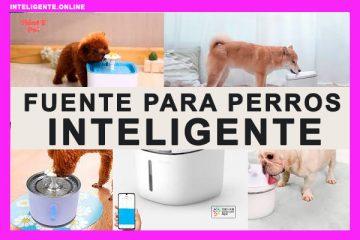 Mejor Fuente para Perros Inteligentes