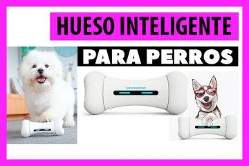 Hueso Inteligente para Perros: Wickedbone Comprar